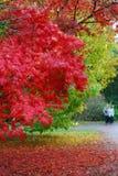 Outono no westonbirt Fotografia de Stock