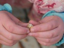 outono Nuts da mão da criança Imagens de Stock Royalty Free