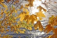 outono o amarelo sae em um fundo da água aonde os raios refletidos do Sun foto de stock royalty free