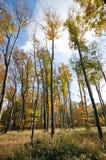Outono o mais forrest fotos de stock royalty free