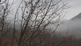 outono, o ramo de uma árvore com gotas das folhas da chuva e do amarelo Nuvens video estoque