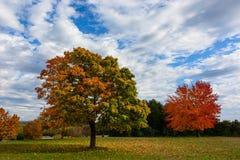 outono, paisagem da queda Árvore com folhas coloridas Imagens de Stock Royalty Free