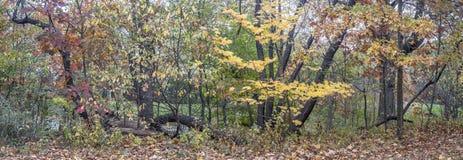 outono panorâmico no parque fotos de stock