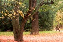 outono, parque de Luzanky, Brno - República Checa fotografia de stock