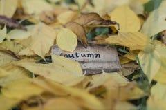 outono pequeno da placa imagem de stock royalty free
