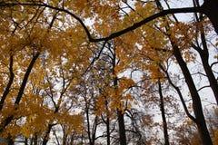 outono pushkin Parque de Catherine Fotografia de Stock