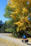 Outono que dá um ciclo em Nova Zelândia Foto de Stock Royalty Free