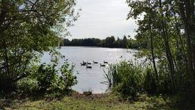 outono que relaxa no lago Fotografia de Stock