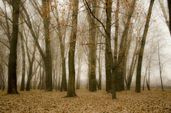 Outono, queda Foto de Stock Royalty Free