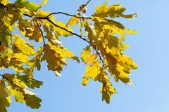 outono, queda, queda da folha, queda da folha imagem de stock