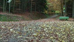 outono Queda da folha na estrada transversaa da floresta de uma estrada de floresta vídeos de arquivo