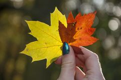 outono sempre colorido quando você estiver no amor imagens de stock
