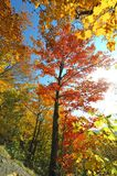 outono sobre a montagem Mansfield em Vermont fotos de stock