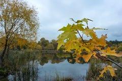 outono transparente brilhante colorido imagens de stock royalty free