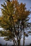outono, tre, cores, Imagens de Stock
