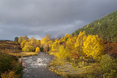Outono, vale Affric Imagem de Stock Royalty Free