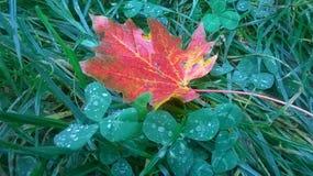 Outono vermelho Foto de Stock Royalty Free
