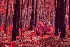 outono vermelho fantástico na floresta imagens de stock royalty free