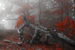 outono vermelho o mais forrest imagem de stock royalty free