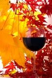 Outono. Vinho vermelho Fotos de Stock Royalty Free