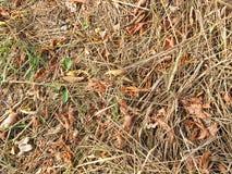 Outonos amarelos e verdes de uma grama Imagens de Stock Royalty Free