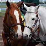 outrider ponys tor wyścigów konnych Obraz Stock