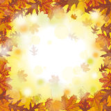 Outside Autumn Foliage Fall Royalty Free Stock Images
