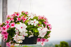 Outside basket filled with flower stock image