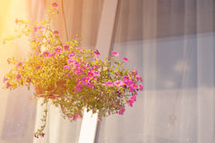 An outside basket filled with vibrant pink petunias Stock Images