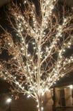 Outside christmas lights Stock Image