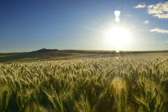 Outside the city - rural landscape - a field Royalty Free Stock Photography