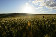 Outside the city - rural landscape - a field Stock Photography