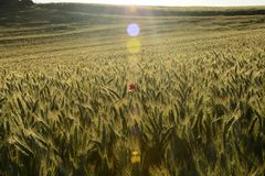 Outside the city - rural landscape - a field. Classic Polish countryside, rural landscape Stock Photo