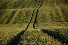 Outside the city - rural landscape - a field Royalty Free Stock Photo
