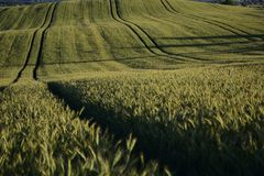 Outside the city - rural landscape - a field Royalty Free Stock Image