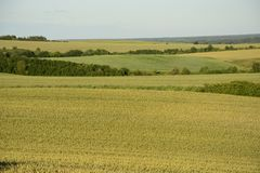 Outside the city - rural landscape - a field Royalty Free Stock Images