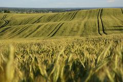 Outside the city - rural landscape - a field Stock Photo