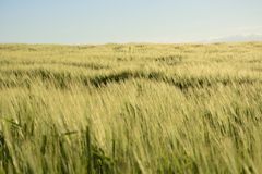 Outside the city - rural landscape - a field. Classic Polish countryside, rural landscape Stock Images