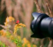 Outside macro photoshooting Stock Photography