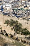 Outside of Medina, Fes, Morocco. An old wall is separating medieval urban medina and a rural sheep pasture, Fes, Morocco Royalty Free Stock Photos