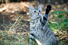 Outside Portrait Of A Cute Kitten Playing Stock Photo