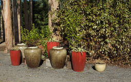 Outside Pot Plants Stock Images