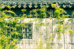 Outside the walls of bamboo growth Royalty Free Stock Photos