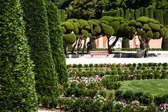 Outstanding cypress trees in Retiro Park in Madrid, Spain Stock Images