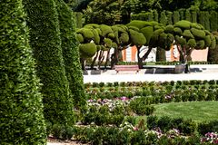 Outstanding cypress trees in Retiro Park in Madrid, Spain Royalty Free Stock Images