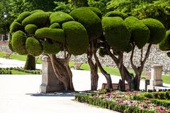 Outstanding cypress trees in Retiro Park in Madrid, Spain Royalty Free Stock Photos