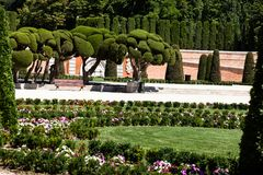 Outstanding cypress trees in Retiro Park in Madrid, Spain Royalty Free Stock Photography