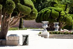 Outstanding cypress trees in Retiro Park in Madrid, Spain Stock Photography