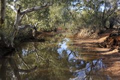 Outstanding Reflections of a Ghost Gum in a small pool in Austra. Lia`s Desert. On the banks of this creek are ghost gums. Calm water hole in the desert of stock photos