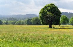Outstanding tree in the Sumava mountains Stock Photography